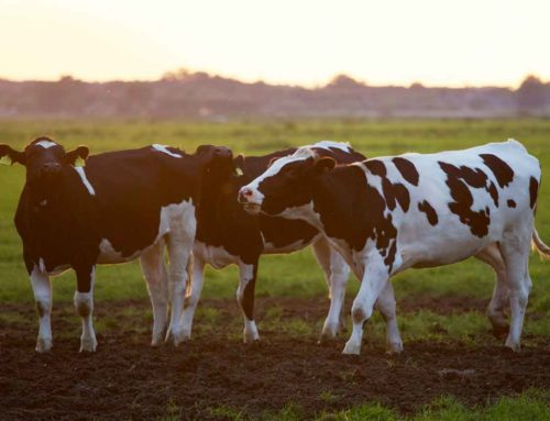 What Does the Banking Royal Commission Mean for Agri-Business?
